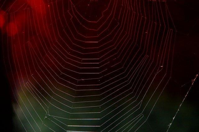 蜘蛛の巣 謀略